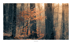 Autumn Forest (Sebastian Bayer) Tags: sunshine autumn olympus geocaching fall nature magisch leaf magical outdoor 124028 wald natur light bume leafes drausen omdem5ii warm outside beautiful forest trees soft colorized teiltonung herbst sonnenschein lightroom sonnenstrahlen bume drauen