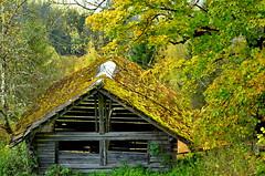 """"""" Autum Salzburg """" (Kalbonsai) Tags: barn autum colors herfst nikon d5100 1685mm salzburg trees austria"""