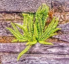 Nature & slate.