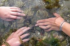 Gentle touch (Jeff Goddard 32) Tags: octopus octopusbimaculatus intertidal naples santabarbaracounty california students outdooreducation tidepools marinebiology