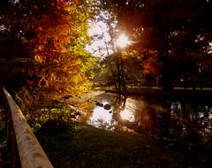 Con il sole d' Autunno (lory6093) Tags: stagione autunno colori parco alberi staccionata sole worldtrekker vividstriking