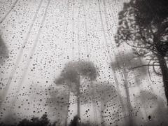 AYUDA EN CONCURSO DE FOTOGRAFA (SaraMolina) Tags: paisaje niebla lluvia arboles gotas agua arbol blancoynegro tormenta beautiful