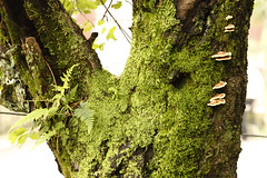 tree moss (arju16) Tags: canon canoneos40d moss mossy ferns kasauli mushrooms hills hillstation wetclimate tree outdoors plants