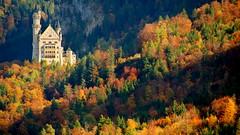 Wrapped in autumn ( (Neuschwanstein, Bayern) (armxesde) Tags: pentax ricoh k3 deutschland germany bayern bavaria baviera allgu autumn fall herbst baum tree golden schloss castle neuschwanstein alps alpen