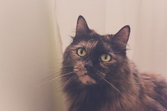 Good morning from Chessie. (anniemwash) Tags: cat pet cateye canon canoneosrebelt5 morning daylight