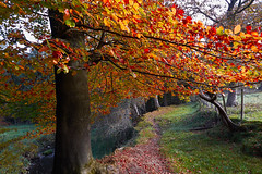 Changing Path (scottprice16) Tags: england lancashire clitheroe field path autumn october branch still colour change deciduous canong1xmarkii