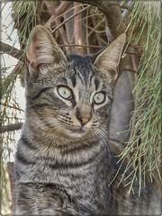 UNA DE GATOS 05 (BLAMANTI) Tags: gatos felinos mascotas