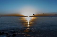 cozumel reflection (DROSAN DEM) Tags: pelican pelicano cozumel mexico sunset ocaso atardecer sun sol nubes cloud sky cielo golden reflection reflejo