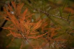 Autumn colors (Infomastern) Tags: botanicgarden botaniskaträdgården lund autumn höst exif:model=canoneos760d geocountry camera:make=canon exif:focallength=130mm camera:model=canoneos760d geostate geocity geolocation exif:lens=efs18200mmf3556is exif:aperture=ƒ56 exif:isospeed=2000 exif:make=canon