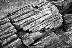 Crystalized Redwood - Black and White Photography - Napa Valley, CA  Leopoldo Rivera Photography | Fall 2016 | (LeoRiveraMedia) Tags: bw blackandwhite california calistoga fall2016 fineart forest halloween leopoldo leopoldorivera nature petrifiedforest photography portfolio rivera sonomacounty streetphotography contrast emotions enchanted explore magical wwwleopoldoriveracom wwwleopoldoriverafilmscom crystalized redwood volcano crystal ash monochrome
