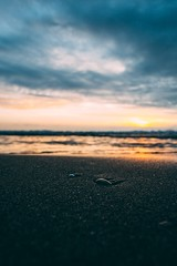 Small shell (mougrapher) Tags: ifttt 500px sea sunset beach water ocean sky clouds sun blue seascape beautiful sand waves light coast beauty travel california mare nuvole sabbia italia