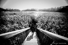 dreams walking away (ZS Channel Drive) Tags: cornmaze happydayfarms nj farm blackwhite bw bwphotography portraits headshots outdoorportraits selfportrait kissingselfie kissing beautiful sunset pigs animals barnanimals girlfriends relationships happiness love funny cannon1dmarkii 50mm 14mm