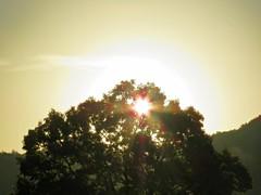 bright autum sunshine (oneroadlucky) Tags: nature plant tree sunshine sunrise morning autum fall japan japanese