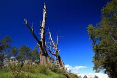 夫妻樹 (rebirthtrochus) Tags: 塔塔加 夫妻樹