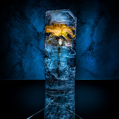 Frozen Rose (Tortured Mind) Tags: 100mmf28 11 kuopio suomi blue colors d800 dslr fi frozen gear homestudio ice lens macro prime productphotography square subject type yellow