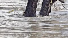 Torino (36) (cattazen.com) Tags: alluvione torino po esondazione parcodelvalentino murazzi pienadelpo cittditorino turin piemonte