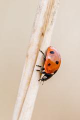 Good Luck (Bea Antoni) Tags: simplicity red ladybug newyear newyears neujahr vielglück goodluck tamron canon makro macro closeup nahaufnahme natur nature animal tier insekt insect bug käfer marienkäfer