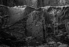 Tree Light (TS446Photo) Tags: nikkor nikon infrared tree black white slate layers natura lens zeiss steps