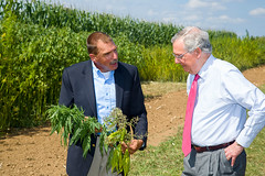 150828acp366mb019.jpg (ukagriculture) Tags: summer weather research hemp researchfarms spindletopfarm