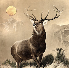 Monarch of the Glen, Edwin Landseer, 1851 333 (frugaltimesinc) Tags: ocean old city nyc travel flowers blue autumn trees winter light sunset red sea sky urban blackandwhite food orange brown white snow chicago newyork abstract black mountains flower color tree green art love beach nature water beautiful beauty leaves silhouette yellow skyline architecture modern clouds forest vintage painting landscape outdoors photography cuisine cafe rocks colorful cityscape unitedstates heart wildlife gray bistro steam cult watercolour espresso swirl coffeehouse bison celestialimages adamasar