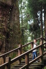 2015-10-25 11.25.35 (pang yu liu) Tags: travel 10 oct 阿里山 旅遊 alishan 2015 十月