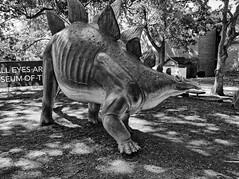 Cleveland Museum of Natural History 08-21-2015 - Stegosaurus Statue 2 HDR BW (David441491) Tags: blackandwhite bw statue dinosaur stegosaurus hdr clevelandmuseumofnaturalhistory