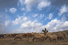 shepherd (naser.shirmohamadi) Tags: sky cloud sheep shepherd donkey naser   shirmohamadi yasukand