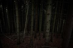 alone in the woods (Schub@) Tags: wood trees art nature forest dark woods sony natur sigma e alpha wald bume f28 dunkel naturpark nex 19mm welzheim a6000 schwbischerwald wieslaufschlucht