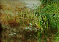 2-132 (Anatoly-V) Tags: summer vacation river 1998 villade