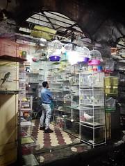 Communication 😙🎶 (lukasch) Tags: bird birds store iran market sale laden communication kommunikation buy shiraz sell vögel käfig bazar vogel verkauf
