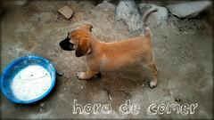 La hora (ore.yahari) Tags: mascota