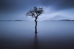 Milarrochy Blues (Douglas Collinson) Tags: longexposure blue sunset tree rain island bay scotland nationalpark filter hour showers argyle grad trossachs lochlomond luss drymen balmaha leefilters milarrochy littlestopper