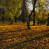 Autumnal memories (Varvara_R) Tags: autumn sunlight fall leaves sunshine yellow russia outdoor foliage coth coth5