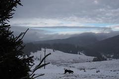 sávos ég / striped sky (debreczeniemoke) Tags: winter sky dog forest landscape kutya ég tájkép tél erdő frakk izvoare izvora maramureș máramaros forrásliget olympusem5