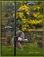 squirrel (FRANK1035) Tags: squirel