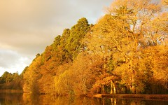 Afternoon's Last Light (Dave Roberts3) Tags: autumn lake reflection fall water wales reflecting newport goldenhour gwent coth tredegarhouse coth5