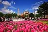 Springtime Hagia Sophia Istanbul (NATIONAL SUGRAPHIC) Tags: flowers tulips cityscapes hagiasophia sultanahmet çiçekler ayasofya laleler cityscapephotography sugraphic ayhançakar nationalsugraphic