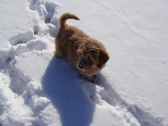 miley-playing-in-the-snow---shes-one-of-riley-and-chewys-girls-_4326061954_o