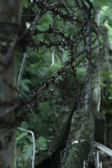 Barbed Wire (kylefrederiksen) Tags: cebu city photoshop lightroom nature light cool barbed wire rugged rough