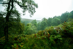 Changes (Costigano) Tags: autumn fall nature ferns green moutain forest woods woodland wicklow ireland irish canon eos lush