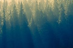 Nature Revealed (Maximecreative) Tags: select autumn mist trees landscape switzerland nature sun sunlight light clouds hope fall orange calm green rays serene intense rift intensity inspirational firs sunburst slice