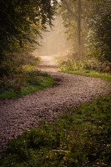 Autumn Mist (Darren Caiels) Tags: autumn trees fog mist morning light woods forest woodland path misty mysterious leaves colourful fall empty alone quiet