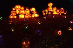 Sesame Street Jack O'Lanterns (Joe Shlabotnik) Tags: pumpkins jackolanterns 2016 oldwestburygardens october2016 sesamestreet afsdxvrzoomnikkor18105mmf3556ged halloween