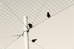 Outside The Net (pni) Tags: net sky monochrome bird crow pole silakkamarkkinat strömmingsmarknad balticherringmarket fair kauppatori salutorget market square helsinki helsingfors finland suomi pekkanikrus skrubu pni