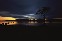 Last Light, Milarrochy Bay (MilesGrayPhotography (AnimalsBeforeHumans)) Tags: autumn britain bay canon 6d canon6d 1635 canonef1635mmf4lisusm dusk eos ef europe evening f4l iconic landscape longexposure lens loch le lochlomond milarrochy milarrochybay milarrochytree nd nighfall nd1000 nightscape night 10stopper outdoors photography reflections rocks scotland skyline sky sunset scenic twilight tree lonetree trossachs lochlomondandthetrossachs uk unitedkingdom village waterscape wide nature westhighlandway