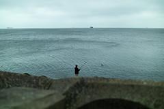 The patient and optimistic cormorant (i-lenticularis) Tags: ships seascape cormorant fishing bangorpier countydown leicam9 northernireland vm35f12noktoni gloomyday cv35f12noktoni 201609 nireland