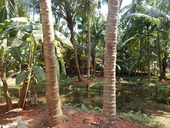 Villages Near Calicut Kerala Photography By CHINMAYA M (20)