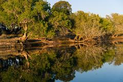 South Africa 2016 (mcmessner) Tags: adventure africa bj boat reflection river tongabezi tongabezilodge water zambeziriver zambia livingstone