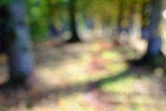 Glencorse Woods, Autumn blur of colours (Richard Xe) Tags: autumn defocus woods blur midlothian glencorsewoods macrolens abstract