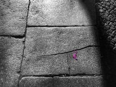 surprise (Peter Schler) Tags: brgersteig sidewalk flickr peterpe1 berlin sw bw